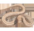 Couleuvre bébé - peau 72