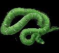 Boa constricteur bébé - peau 5