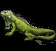 Iguane ##STADE## - peau 72