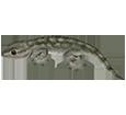Gecko adulte - peau 5